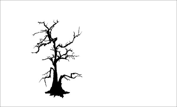 The gray dead tree isolated on white background.