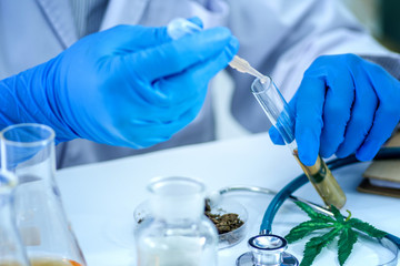 Tweezers hold cannabis bud in a laboratory