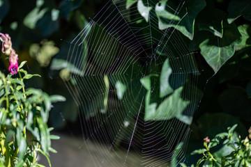 Toile d'araignée en cercle