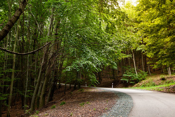 Asphalt road in a green forest in mountain between trees