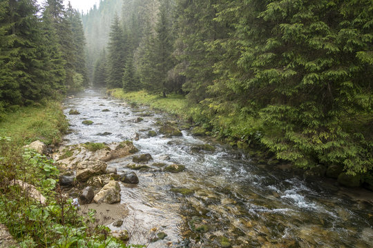 Fast river near forest in Bucegi mountains,  Romania, in a foggy day