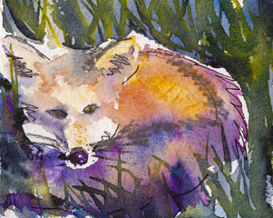 Details of watercolour painting studies for a wildlife illustration project showing colour, textures and techniques.A fox.