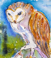 Details of watercolour painting studies for a wildlife illustration project showing colour, textures and techniques. An owl.