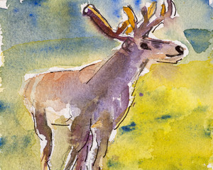 Details of watercolour painting studies for a wildlife illustration project showing colour, textures and techniques. A deer.