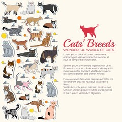 Vector breed cats icons sticker set. Cute animal illustrations pet design. Collection different kitten layout flat sticker cover