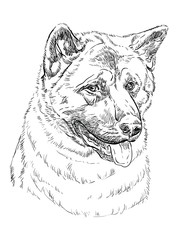 American akita vector hand drawing portrait