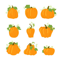 Set of simple yellow pumpkins with leaves and vines. Isolated on white background. Different shapes.