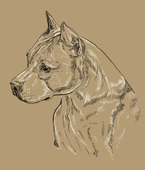 Monochrome American Staffordshire Terrier-2 vector hand drawing portrait