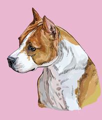 American Staffordshire Terrier-2 colorful vector hand drawing portrait