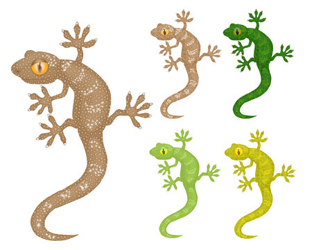 Gecko, set of the same image of a lizard in different colors. Vector illustration, isolated objects.
