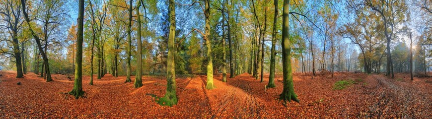 Beautiful 360 degree panorama of a vibrant sunrise in the forest in autumn in the Netherlands with a blue sky and colorful leafs