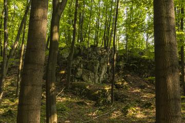 Tyniecki forest near Cracow