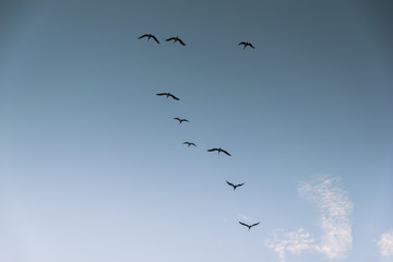 Group of birds migrating against the nice blue sky