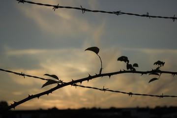 Secured barbed border line