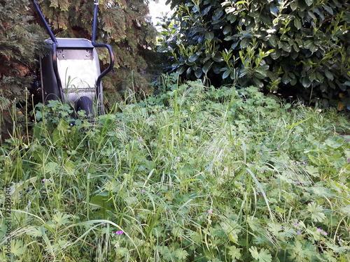 Verwilderter Garten Mit Schubkarre 2 Stock Photo And Royalty Free