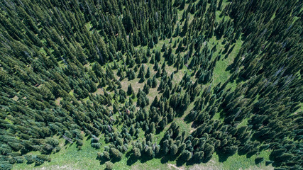 Aerial view looking down on a forest of pine trees