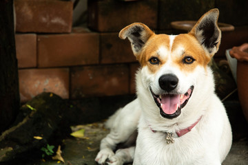 smiling dog pose on camera. look like he happy
