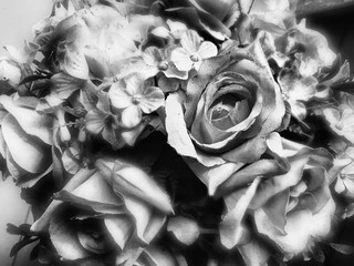 dark black roses background. natura roses background. greeting card with a luxury roses