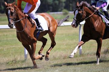 Pferderennen (Galopp)