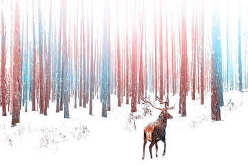 Fototapete - Lonely noble deer male in snowy winter forest. Christmas winter image in pink and blue ciolor.