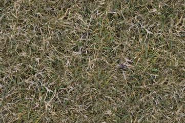 Tekstura bezszwowa - trawa
