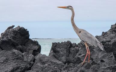 Galapagos wild life