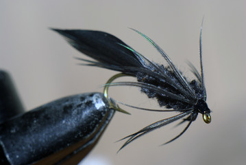 Black Jackson fly for flyfishing