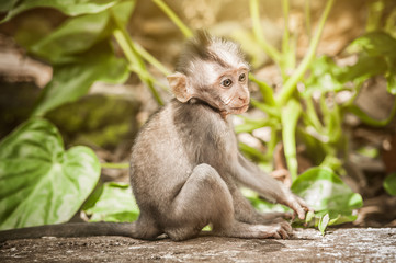 Adorable little baby macaque monkey at S