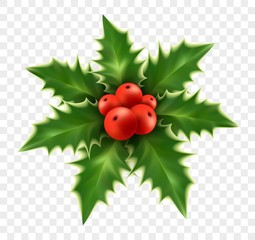 Realistic Christmas holly isolated on background. Vector illustration