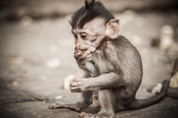 Beautiful view of a baby monkey eating food