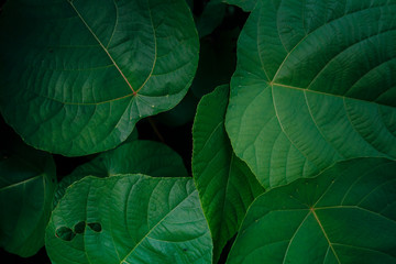 Creative layout made of green leaves. Flat lay. Nature background at phuket thailand