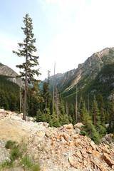 Tall trees in rugged, rocky, terrain