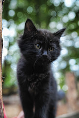 black kitten portrait in nature