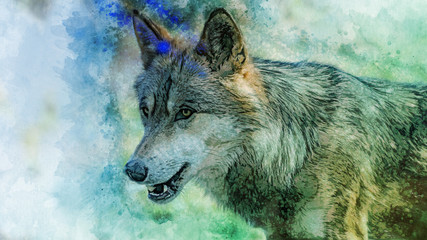 Watercolor wolf head. Color background on paper, multicolor illustration.