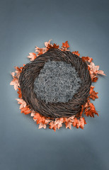 Infant Nest Fantasy Background Photo Prop with fall leaves and moss Isolated on gray blue background.