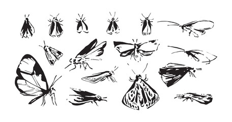 Set of hand drawn stylized insects. Sketch style vector illustration of moth silhouettes. Black isolated on white background