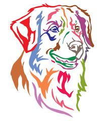 Colorful decorative portrait of Dog Toller vector illustration