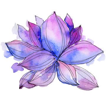 Wildflower watercolor purple lotus flower. Floral botanical flower. Isolated illustration element. Aquarelle wildflower for background, texture, wrapper pattern, frame or border.