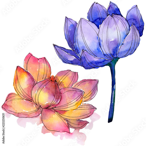 Wildflower watercolor colorful lotus flower floral botanical flower wildflower watercolor colorful lotus flower floral botanical flower isolated illustration element aquarelle wildflower mightylinksfo