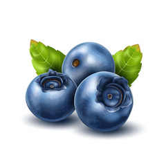 Vector realistic blueberry with 3d leaves set