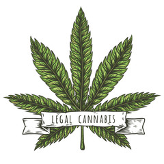 Cannabis leaf vector illustration. Vector eps10 isolated illustrations.