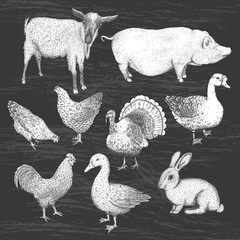 Collection of farm animals. Vector eps10 isolated illustrations.
