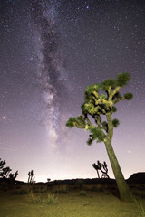 Joshua Tree under Stars