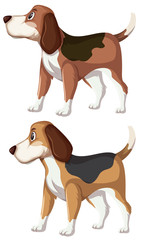 A set of beagle dog