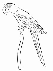 illustration of a parrot , vector drawing
