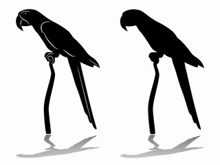 silhouette of a parrot , vector drawing
