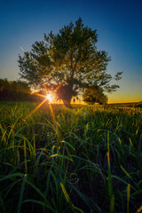 Foto op Aluminium Ochtendgloren Nature landscape scene at sunset with the sun behind a tree and grass in the foreground