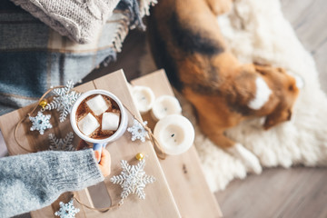 Woman hands with cup of hot chocolate close up image; cozy home; sleeping dog; christmas time