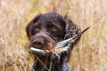 a dog with a wing in his mouth in the autumn grass