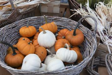 Kürbis, Herbst, Gartenarbeit